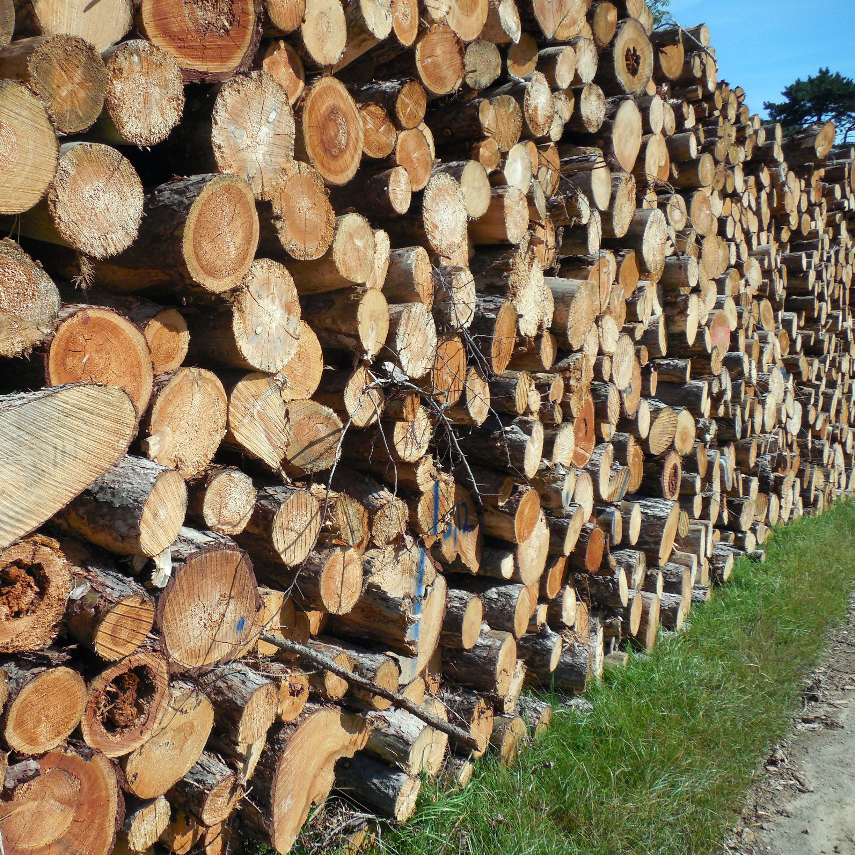 wood-1652055